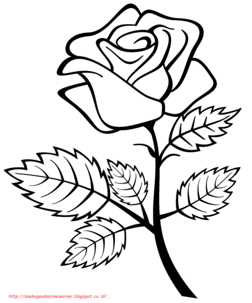 24 Gambar Sketsa Bunga Dari Pensil Yang Mudah Dibuat Gambar Pedia