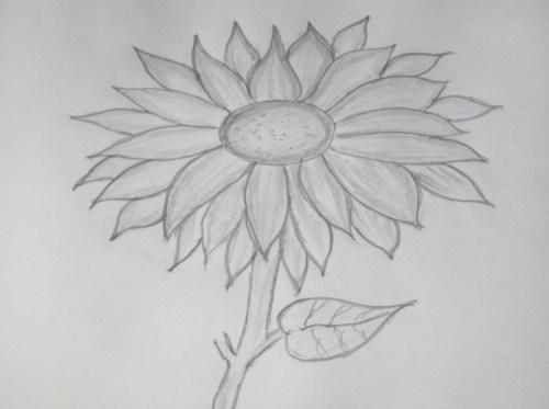 gambar sketsa bunga