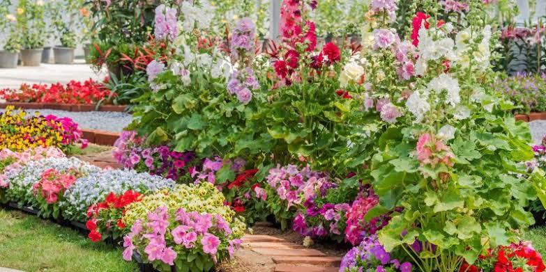 pertanian hortikultura