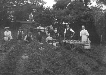 children strawberry picking in Botley