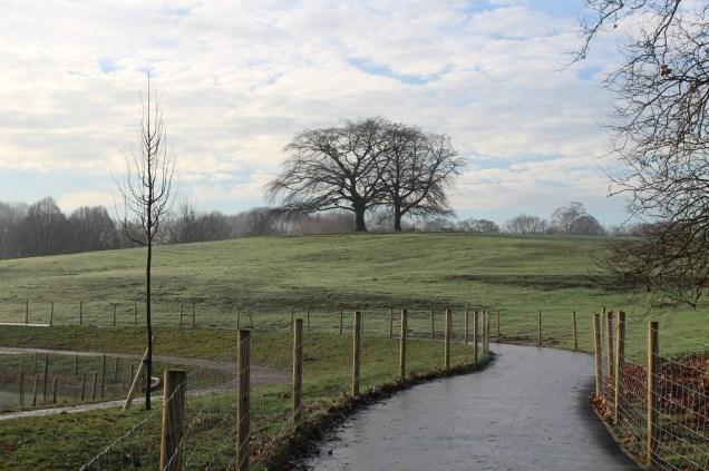 mbp-meadow-restoration-14-dec-2016-10