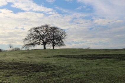 mbp-meadow-restoration-14-dec-2016-7
