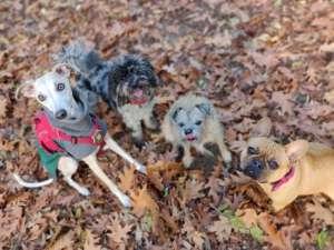 Hampstead Hounds Adventure Walks