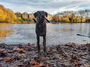 Hampstead Hounds One-to-one Walks