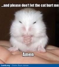 Staring Hamster Meme Tik Tok Youtube