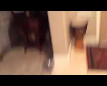 Funny hamster - 1506668840 funny hamster