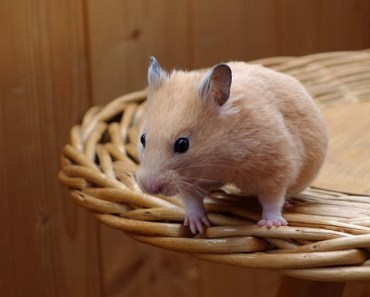 Can Hamsters Eat Pumpkin Seeds