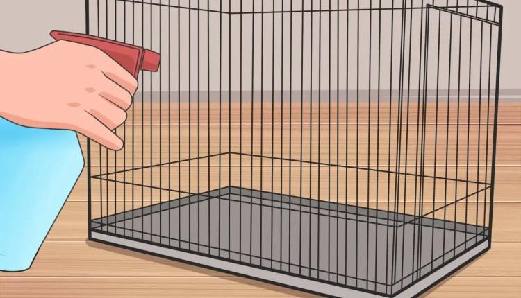 Hamster Cage Setup Guide