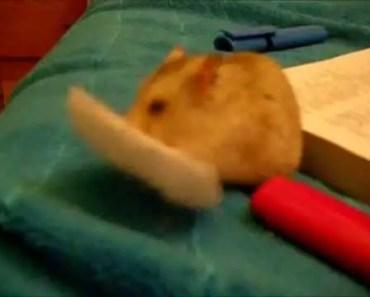Barunka - funny hamster - barunka funny hamster