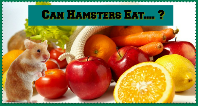 Can Hamsters Eat Oranges