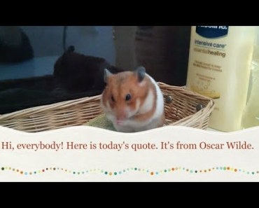cute golden hamster's face close-up funny video to learn 9 languages with - cute golden hamsters face close up funny video to learn 9 languages with