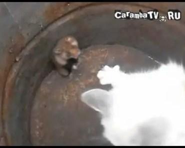 Funny cat vs. hamster - funny cat vs hamster