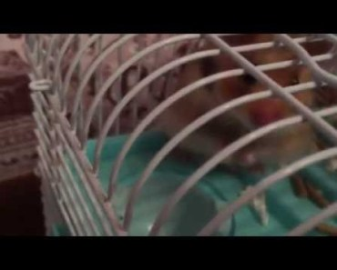 Funny cute hamster!!! - funny cute hamster