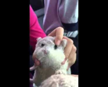 Funny Hamster 2 - funny hamster 2