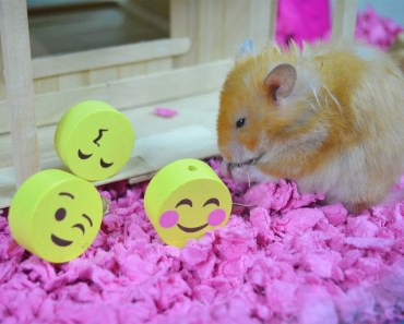 FUNNY Hamster Emojis Party- Hamster House Tour!- hamster cage - cupcake ham ham - funny hamster emojis party hamster house tour hamster cage cupcake ham ham