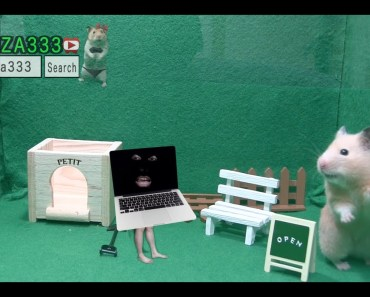 FUNNY Hamster Story : Fear visitors - funny hamster story fear visitors