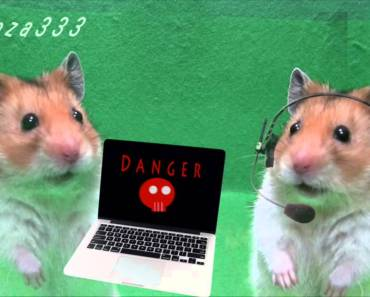 FUNNY Hamster Story : Space travel - funny hamster story space travel