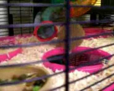 Funny hamster with dog bone - funny hamster with dog bone