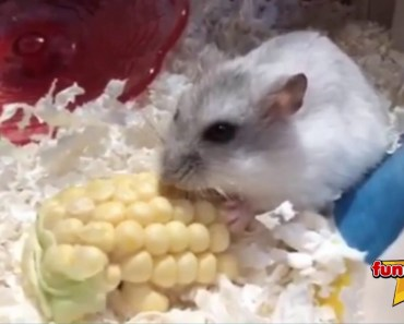 Hamster Funny Video - hamster funny video