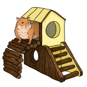 How to take care of hamsters?