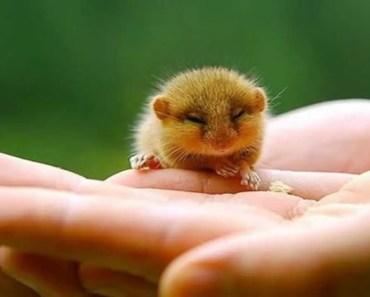 Hamsters - Cute Hamsters Doing Funny Things - hamsters cute hamsters doing funny things