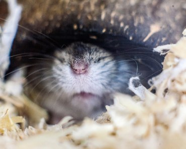 HD Cute Hamster - Funny pet video - My cute dwarf hamster sleeping and dreaming - hd cute hamster funny pet video my cute dwarf hamster sleeping and dreaming