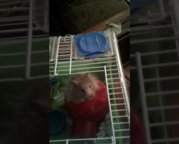 My funny hamster... - my funny hamster