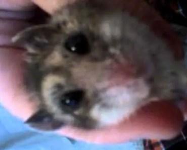 Scared Hamster (funny) - scared hamster funny