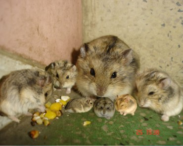 small pets - hamster funny - hamster funny moments - small pets hamster funny hamster funny moments
