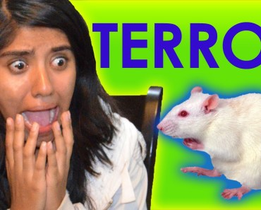 Terrified of a mouse (funny pranks, hamster, mouse, fake, real, scared girl, scream, joke) - terrified of a mouse funny pranks hamster mouse fake real scared girl scream joke