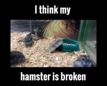 This Hamster is broken Promote By World Funny Vines - this hamster is broken promote by world funny vines