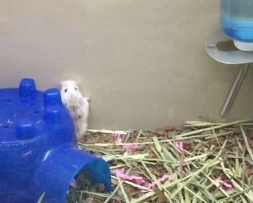 THIS HAMSTER IS SO FUNNY - this hamster is so funny