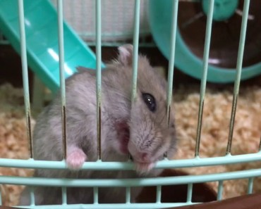 WHAT'S HAPPENED?   funny incidents [hamster] - whats happened funny incidents hamster