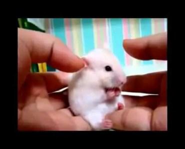 Funny hamster - 1507531148 funny hamster