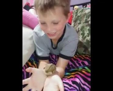 Funny hamster - 1507671924 funny hamster