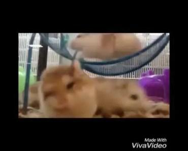 16 seconds with hamsters - 16 seconds with hamsters