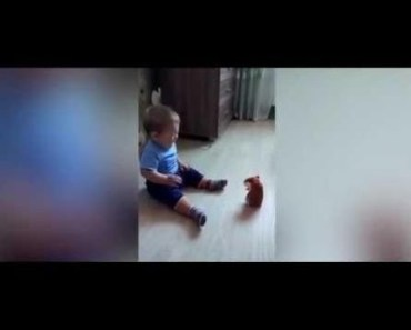 Baby Life | Funny baby moment - Toy hamster sound frightens cute baby boy - baby life funny baby moment toy hamster sound frightens cute baby boy