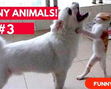 Cat vs dog Funny Animals #3 | Super funny animal compilation - cat vs dog funny animals 3 super funny animal compilation