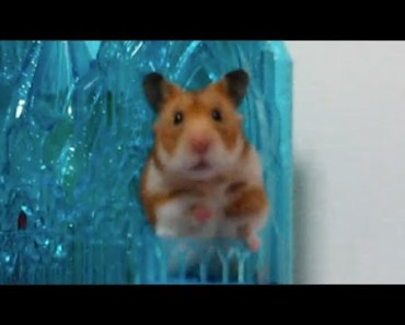 "Cute golden hamster doing funny and crazy things in Elsa's Sparkling Ice Castle (movie ""Frozen"") - cute golden hamster doing funny and crazy things in elsas sparkling ice castle movie frozen"