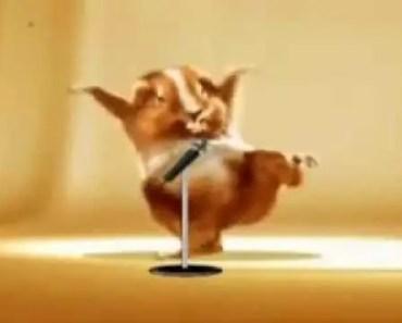 Cute hamster dance funny video - cute hamster dance funny video