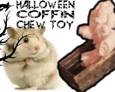 D.I.Y Halloween Coffin Hamster Chew Toy | #FrightMonth - d i y halloween coffin hamster chew toy frightmonth