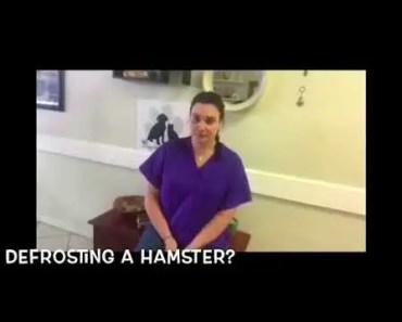 Defrosting A Hamster! - defrosting a hamster