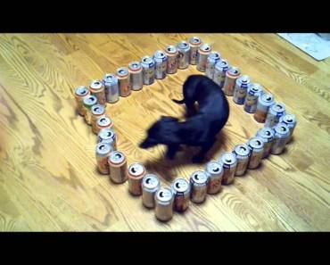 dumb vs. smart wiener dog - dumb vs smart wiener dog