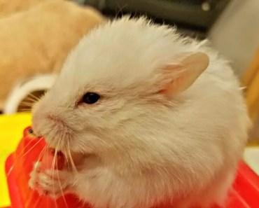 FIREFIGHTER HAMSTER SAVING LIVES - FUNNY HAMSTER - firefighter hamster saving lives funny hamster