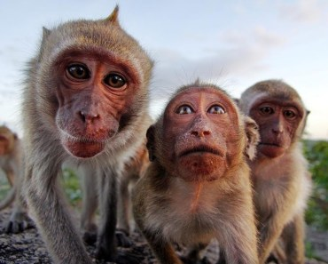 Funny And Cute Monkeys Compilation! - funny and cute monkeys compilation