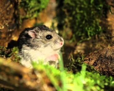 Funny Commercial - Talking Hamster Wants Pants - funny commercial talking hamster wants pants