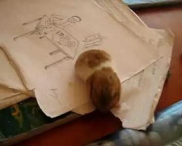funny hamster 2 (homework destroyer) - funny hamster 2 homework destroyer