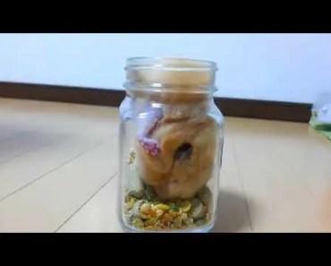Funny Hamster 4 - funny hamster 4