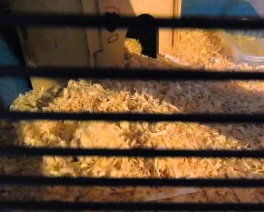 funny pets hamster videos making tunnels - funny pets hamster videos making tunnels