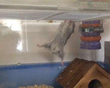 funny spider hamster - funny spider hamster